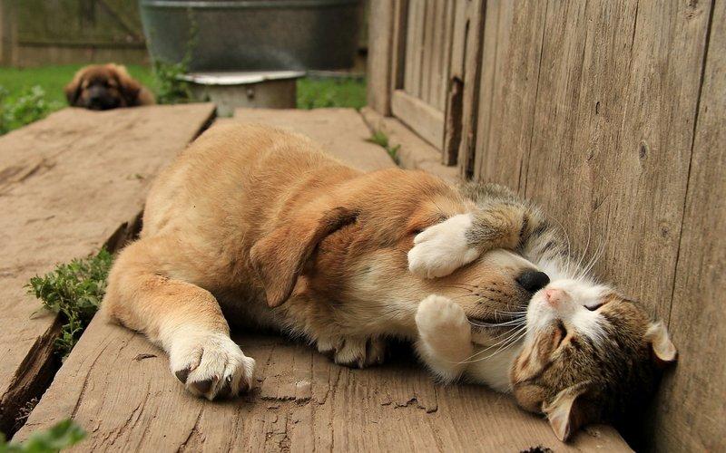 Пес спит на коте