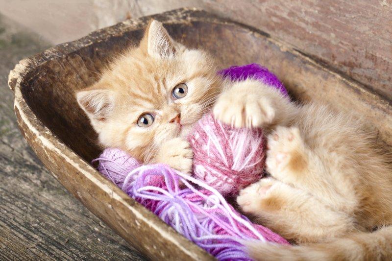 Котенок с клубочками ниток