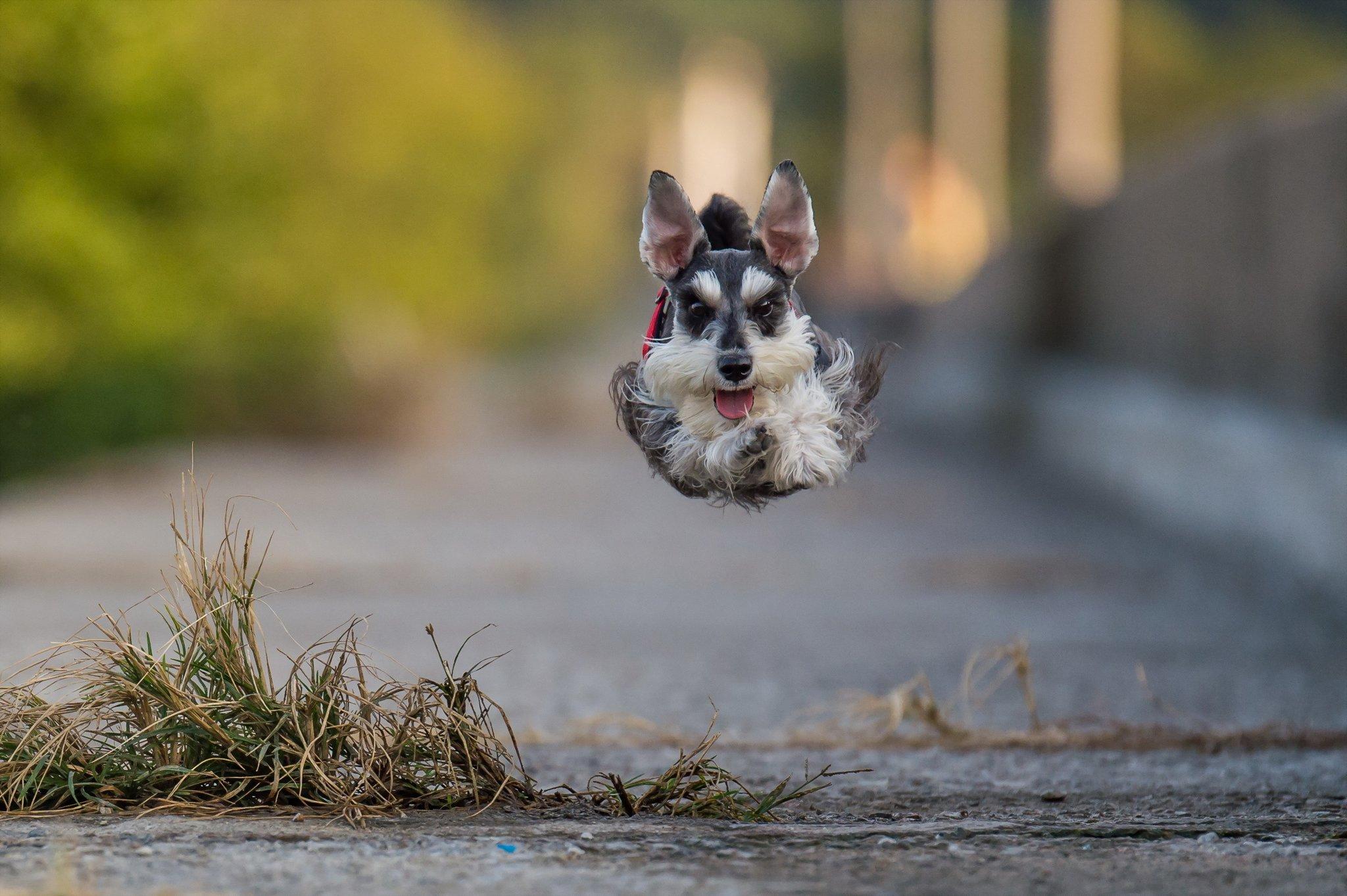 Смешные животные фото собаки