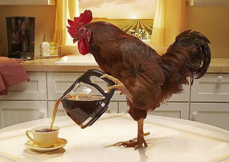 Петух наливает кофе