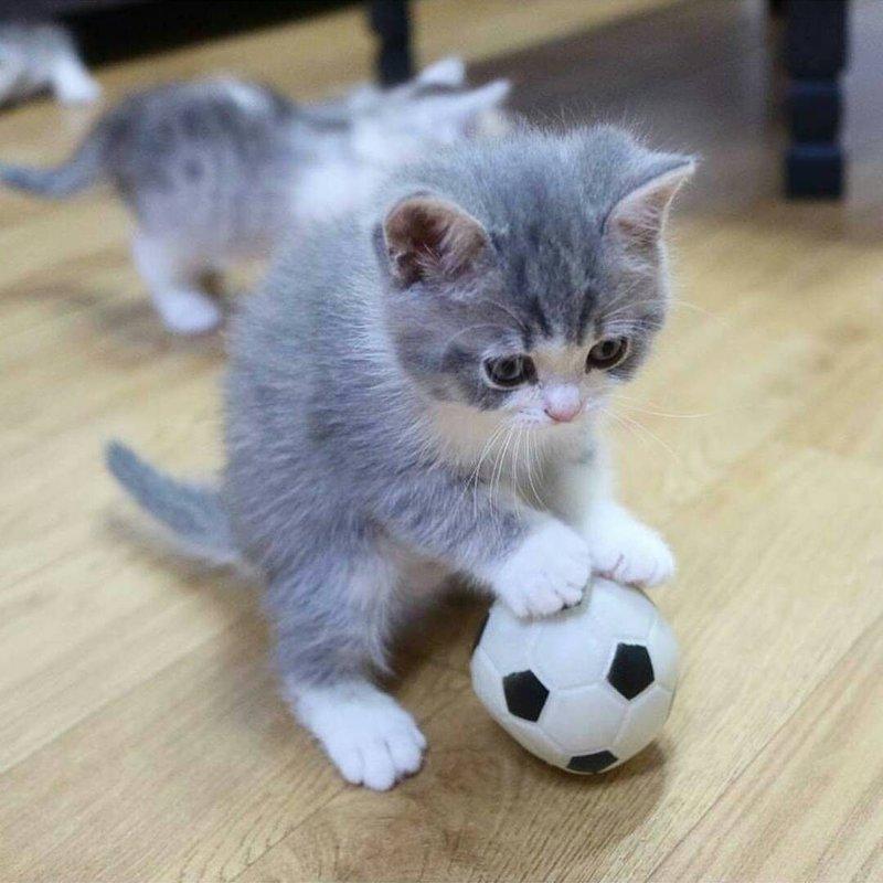 Котик играет с мячиком