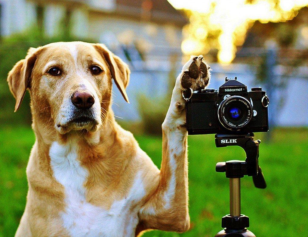 Обмен фотоаппарата с доплатой в москве учетом