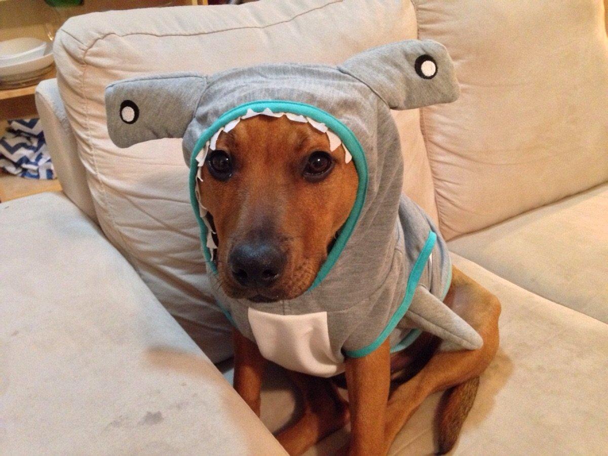 Дебильная собака фото