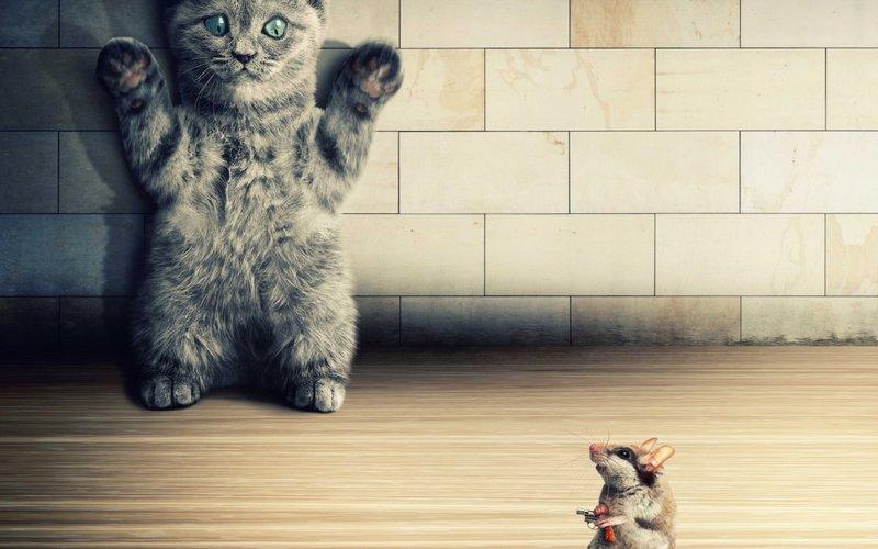 Котик с мышкой