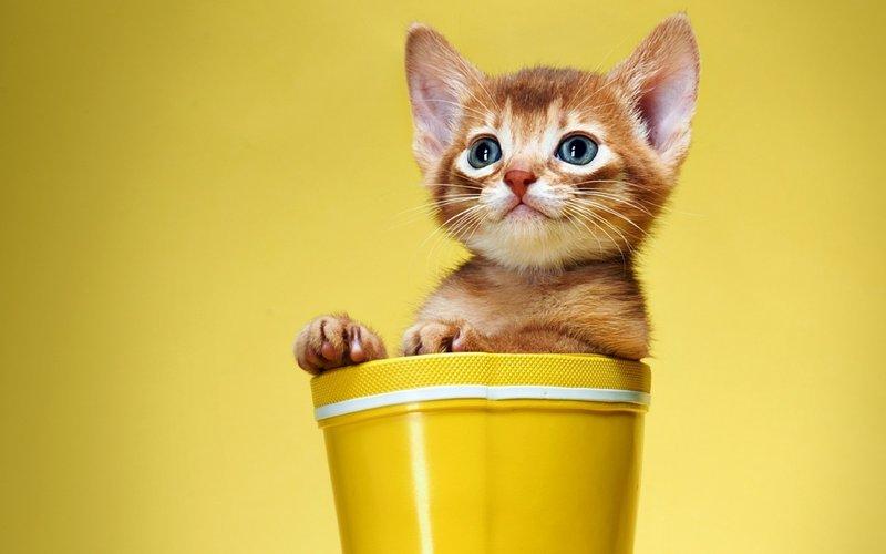 Котенок в желтом горшке