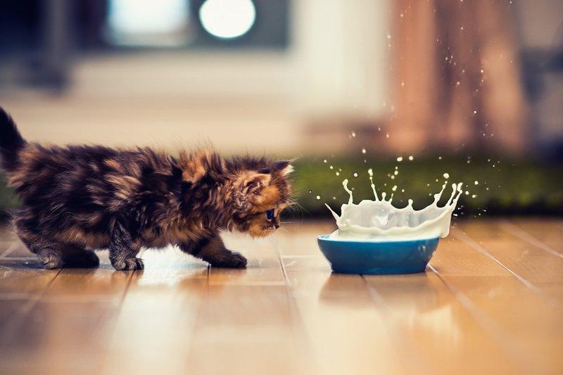 Котик и молоко