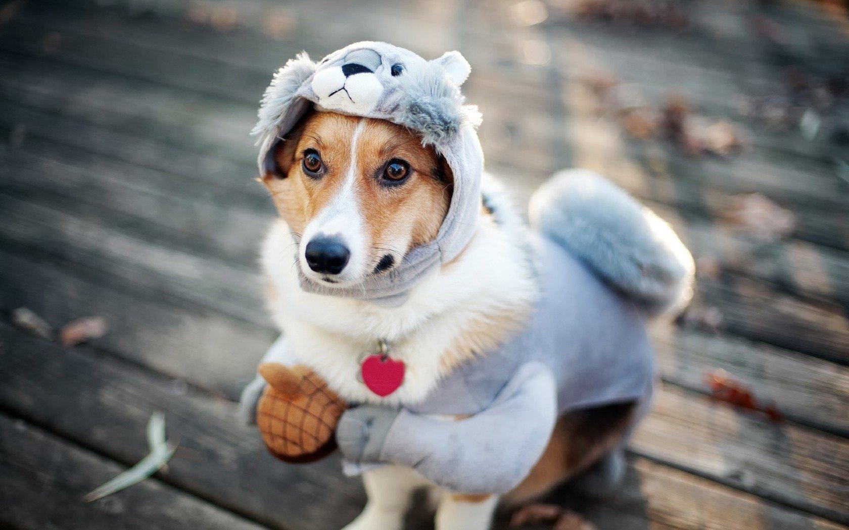 Прикольные картинки собачками