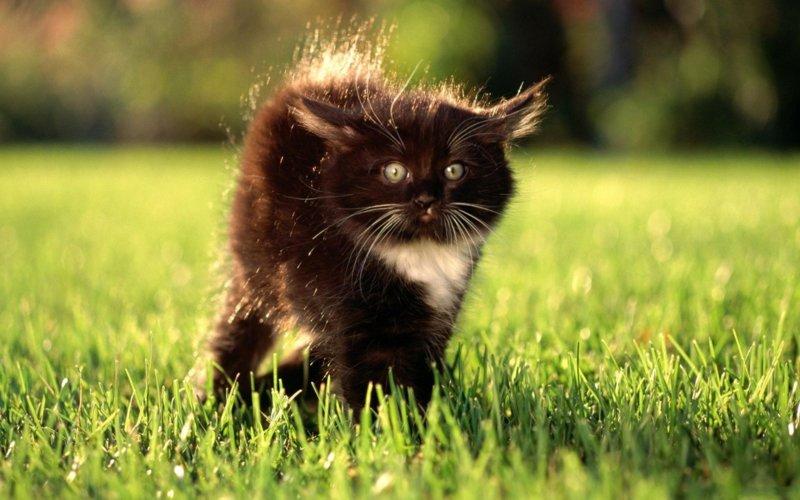 Черно-белый котик