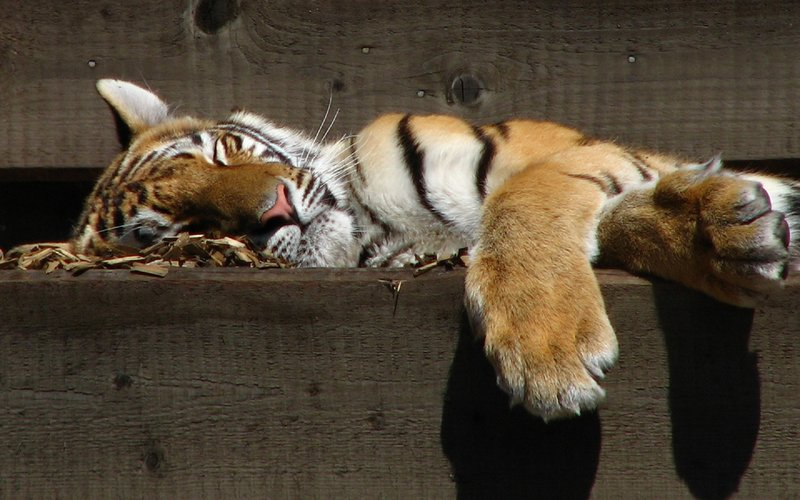 Большой котик спит