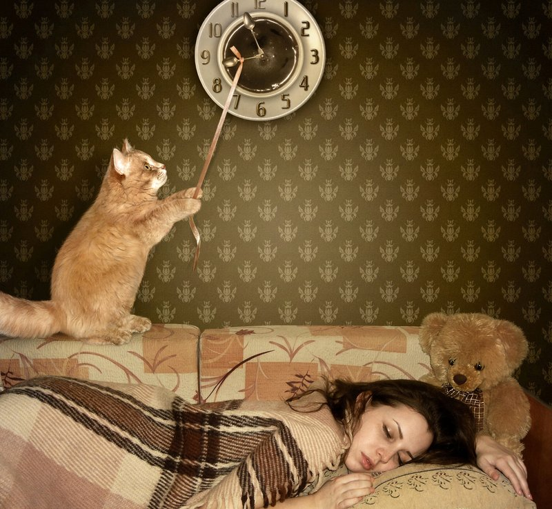 Кот меняет время