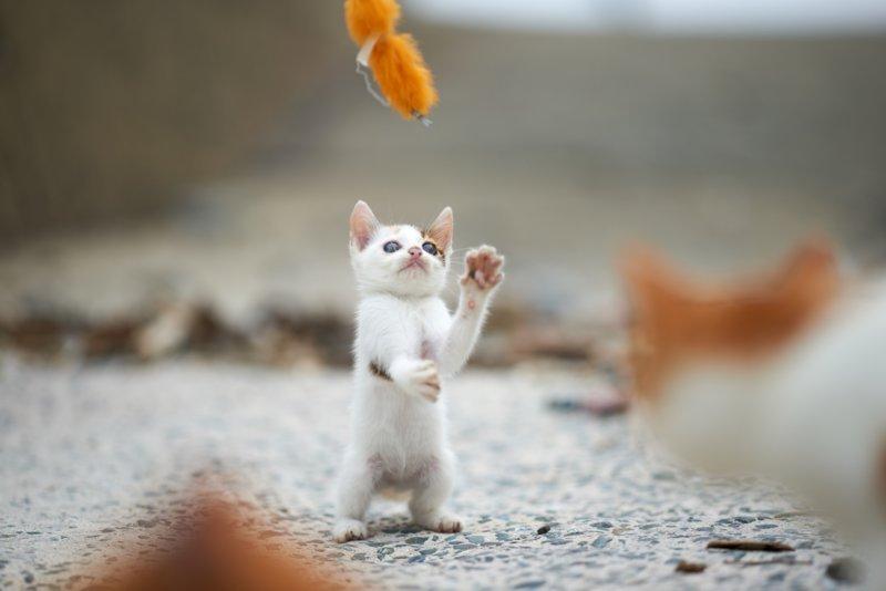 Котенок танцует с игрушкой