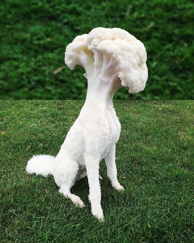 Собака-брокколи