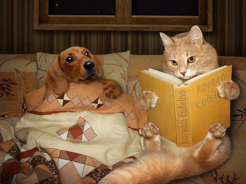 Кот читает псу сказки
