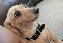 Забавные фото собак
