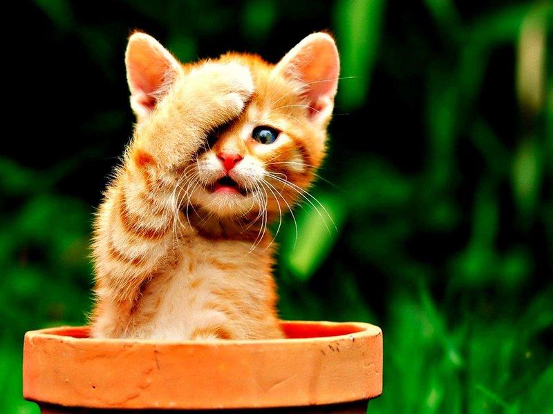 Котенок в глиняном горшке