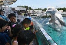 Дельфин плюется