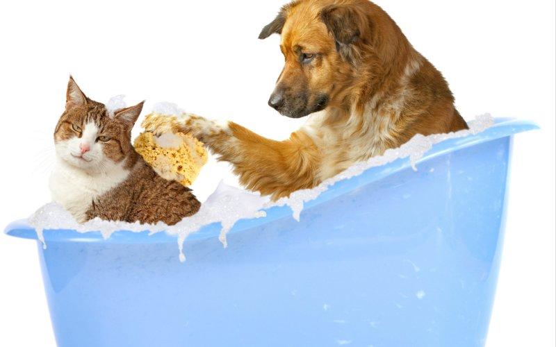 Собака купает кота