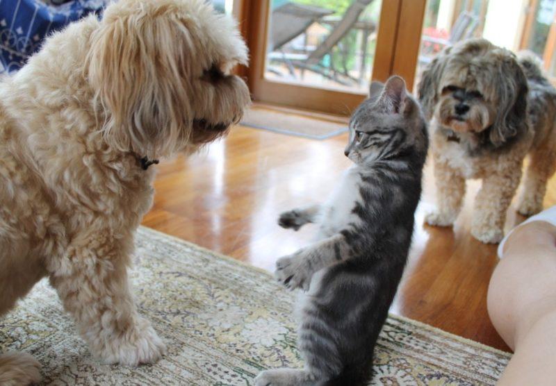 Кот на задних лапах