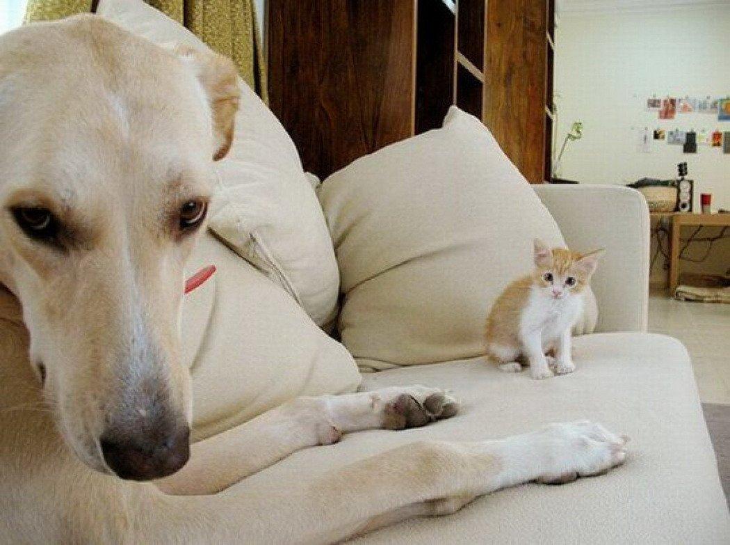 Коты и собаки фото смешные