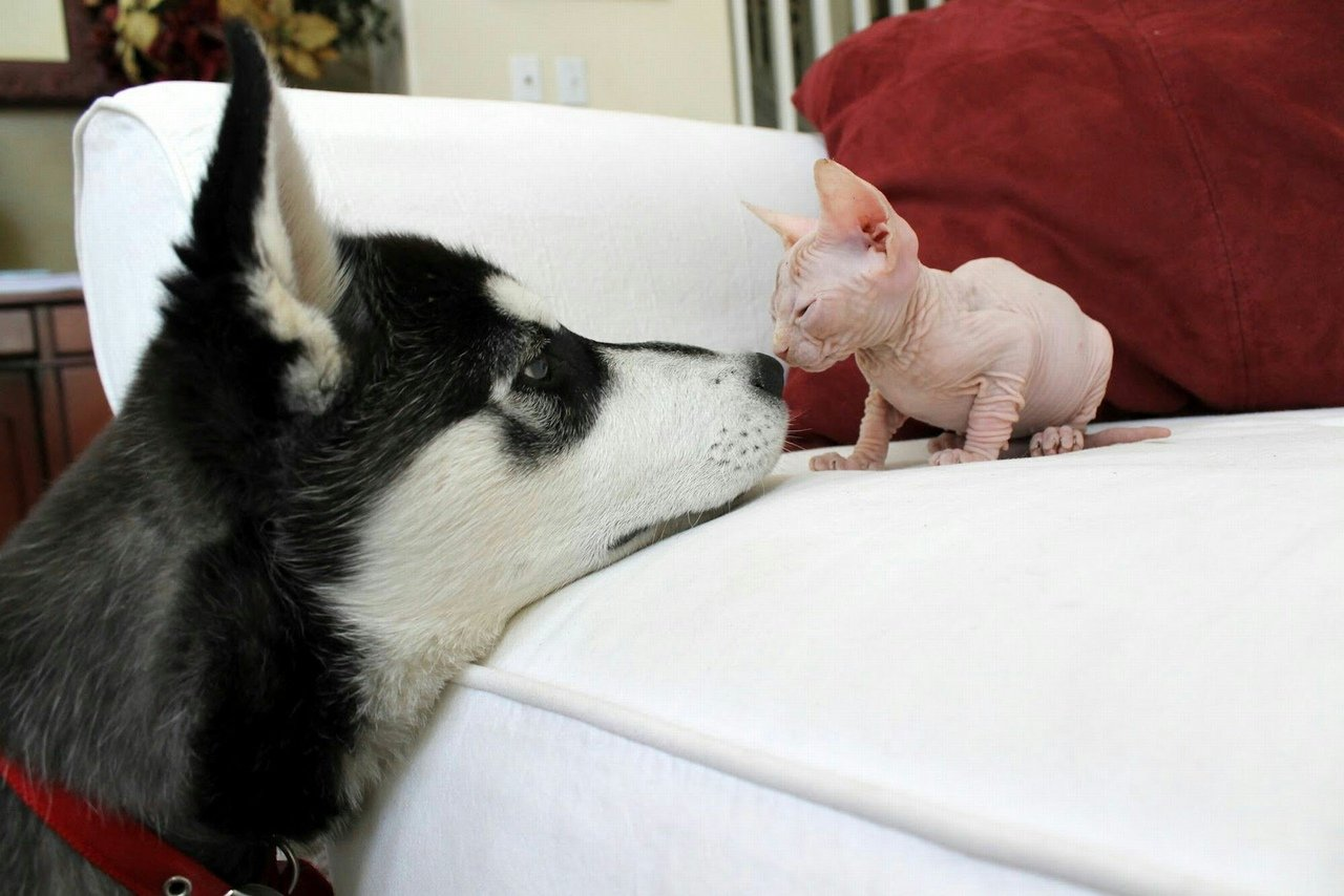 Смотреть смешные фото с животными и надписями