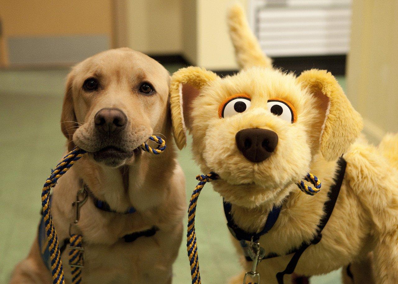 Смешная прикольная собака картинки