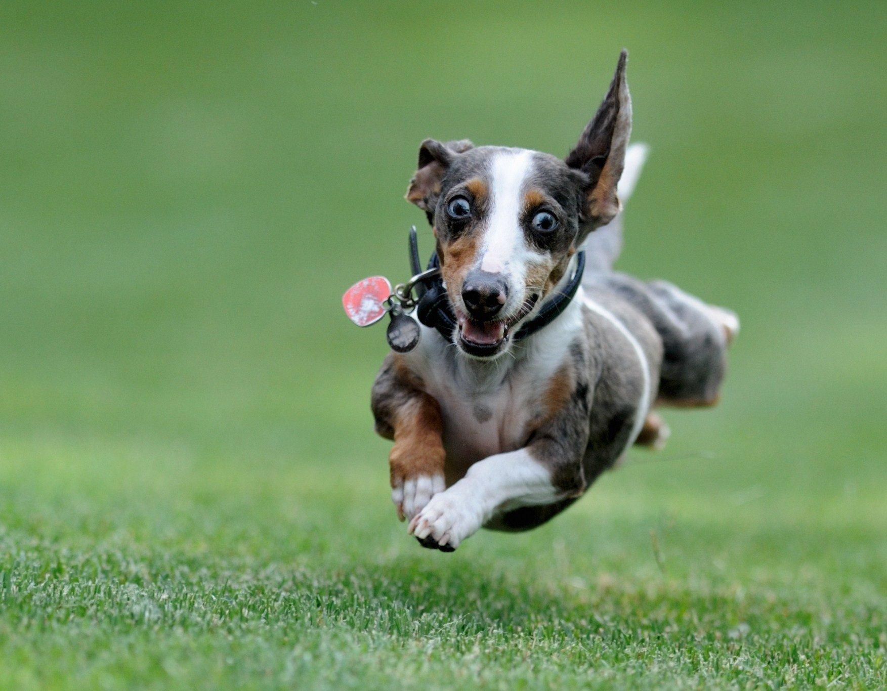 Прикольные фото и картинки собак