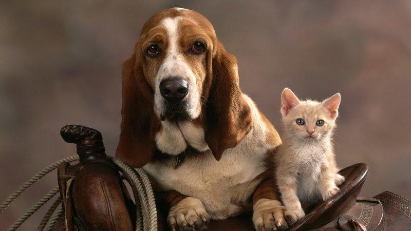 Пес с котенком