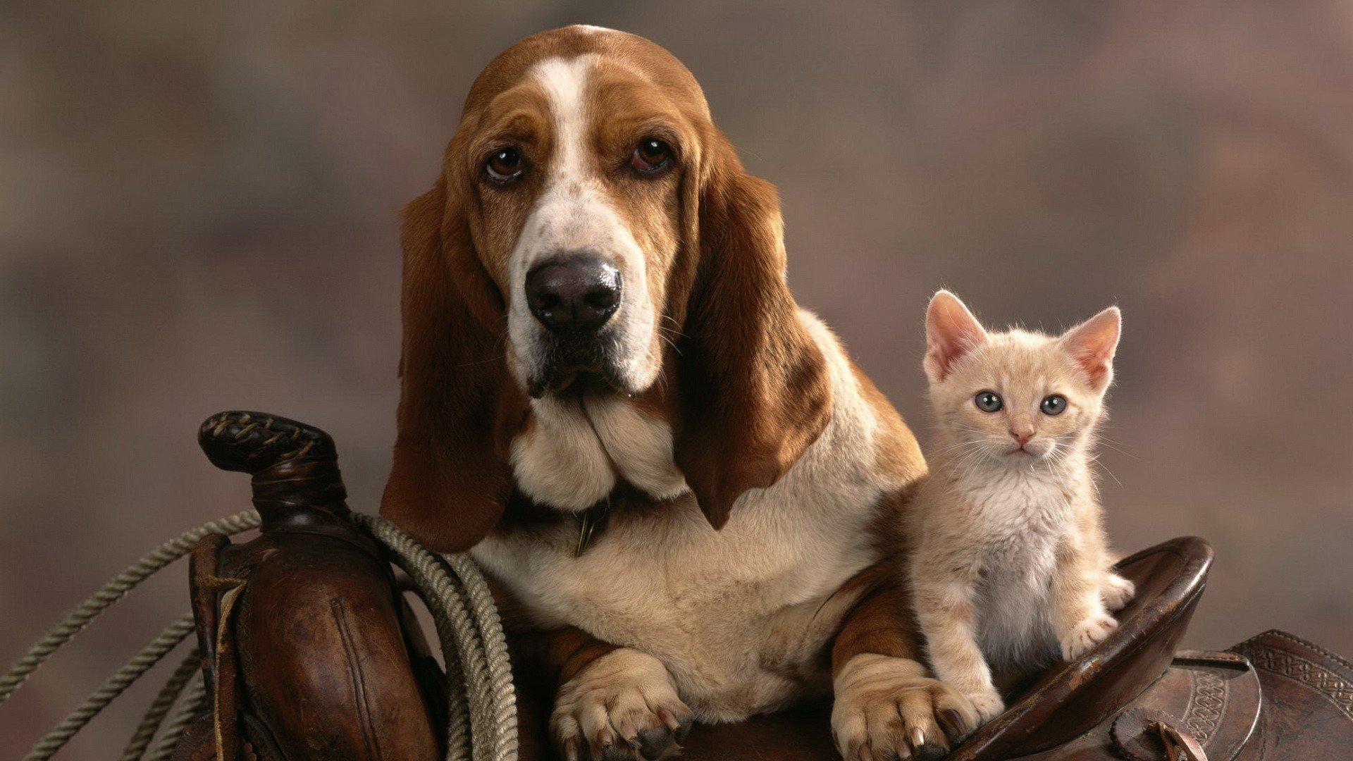 большой прикольные фото собак на рабочий стол галереи