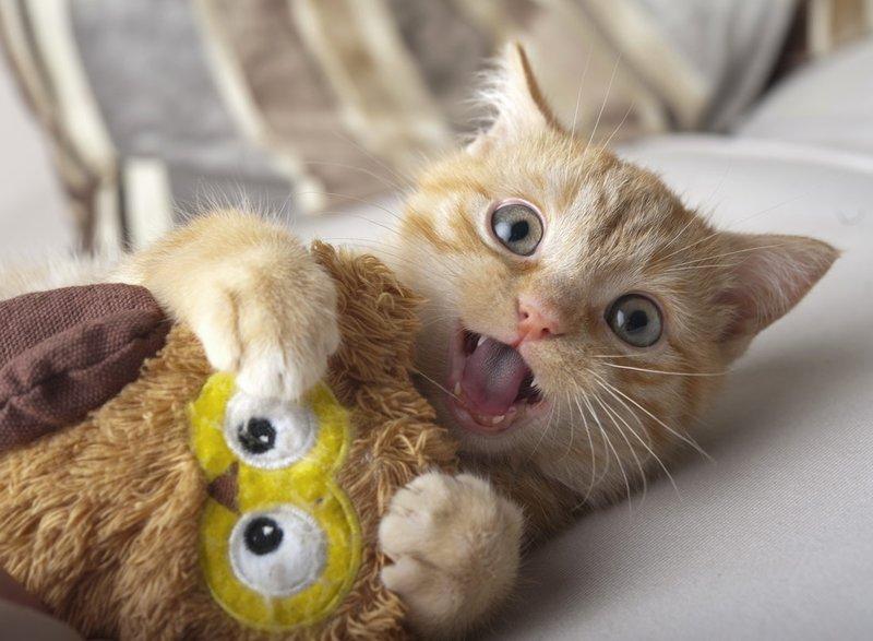 Смешной котенок с игрушкой