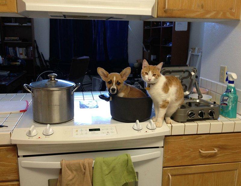 Кот и щенок в кастрюле