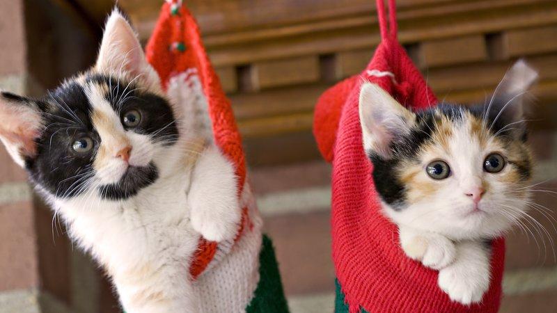 Котята в подарочных носочках