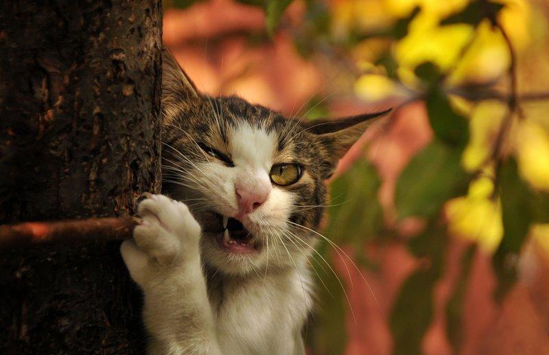 Кот грызет ветку