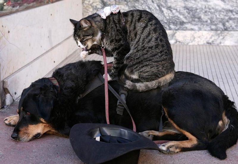 Кот, пес и мыши