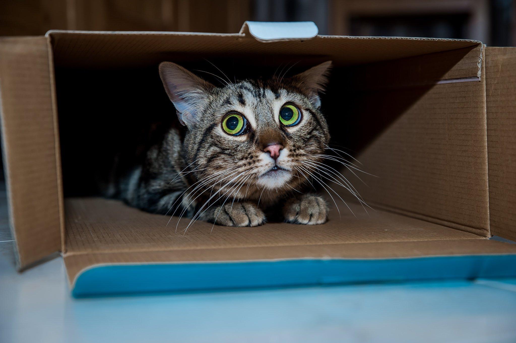Картинки коты в коробке