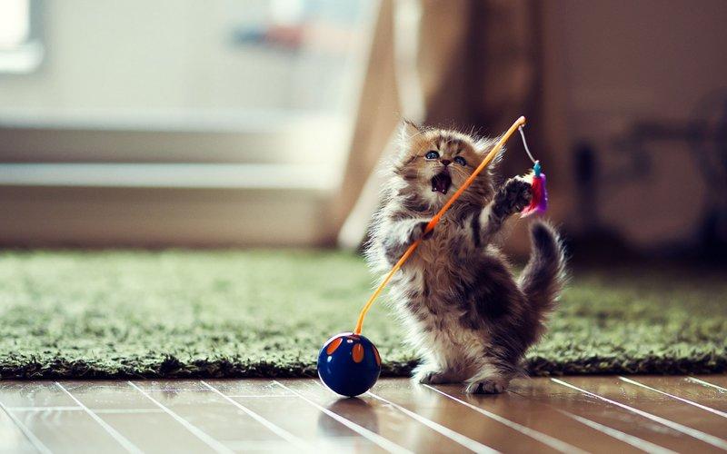 Котик играет