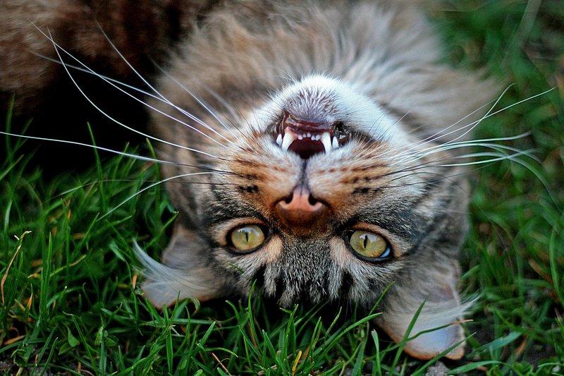 Котик балуется