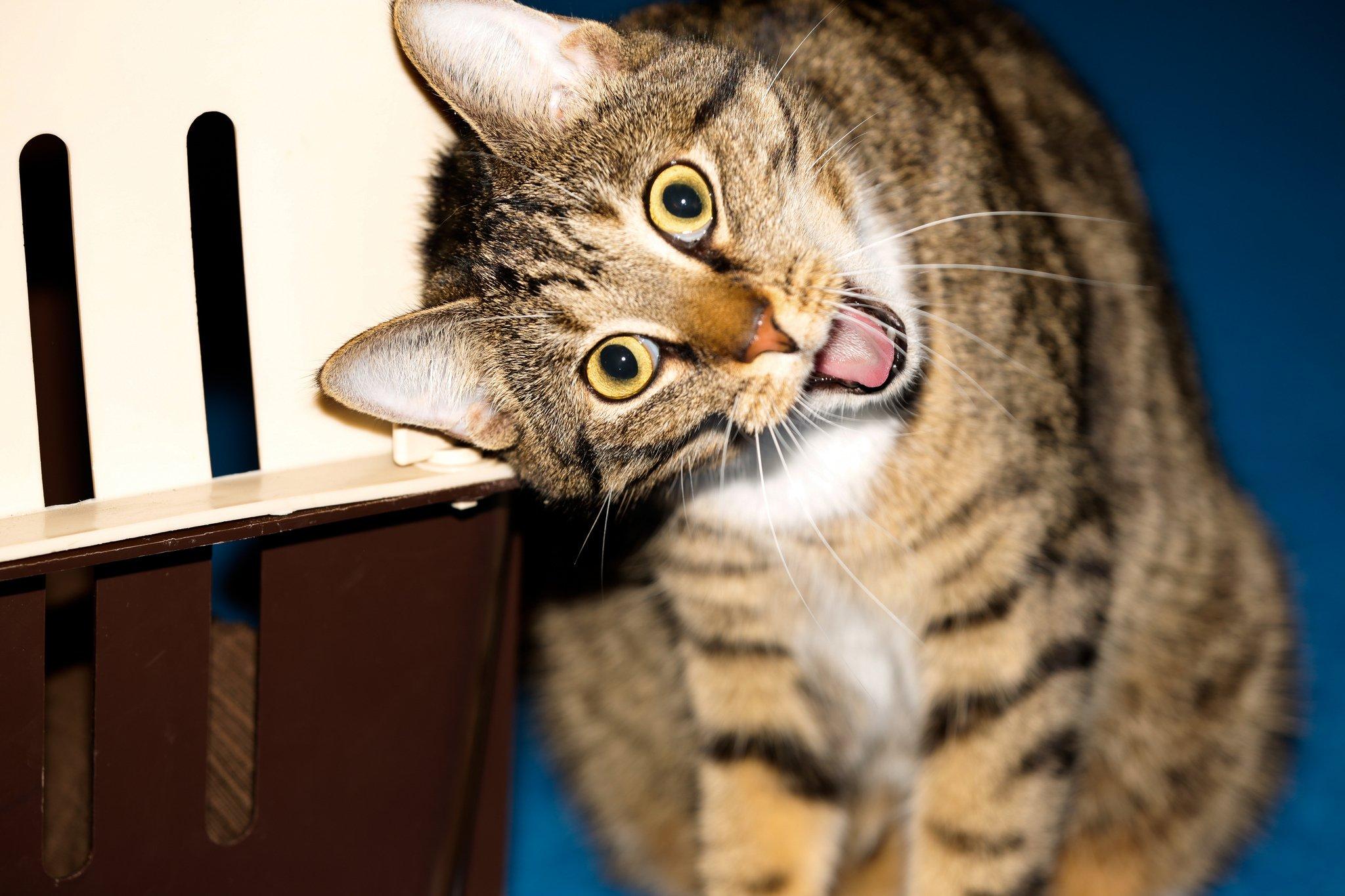 Классные картинки котов и кошек