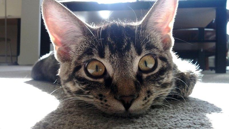 Котик говорит доброе утро