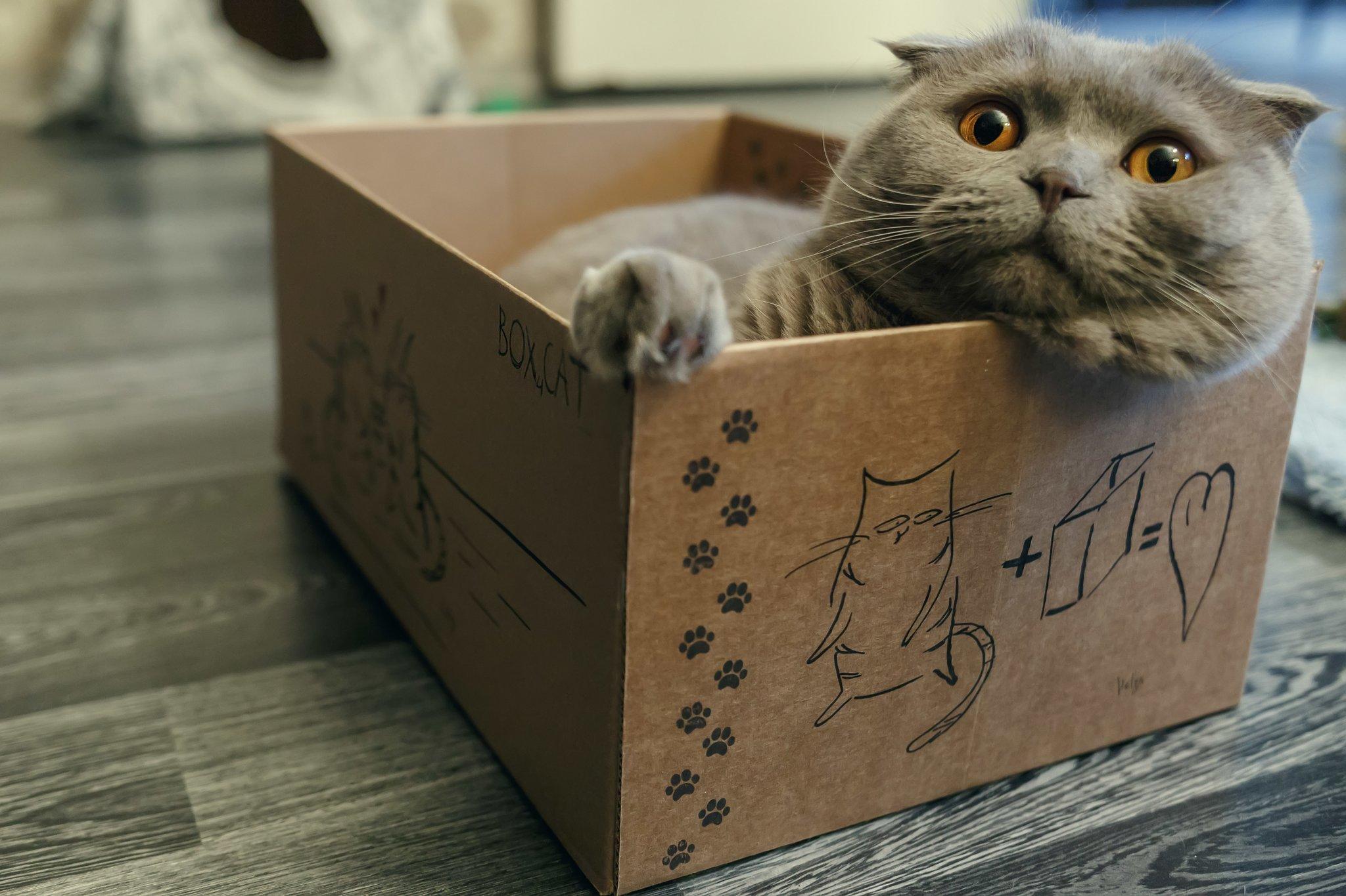 Картинки коты в коробке, анимация картинок открытки