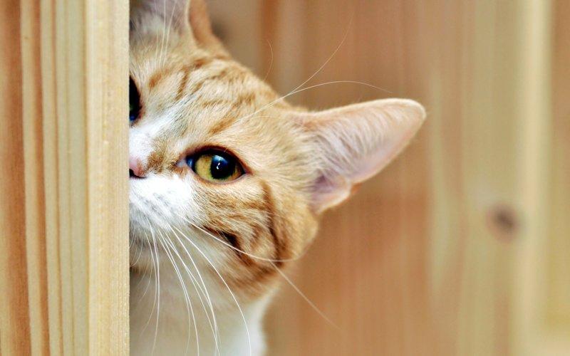 Котик ласково подглядывает