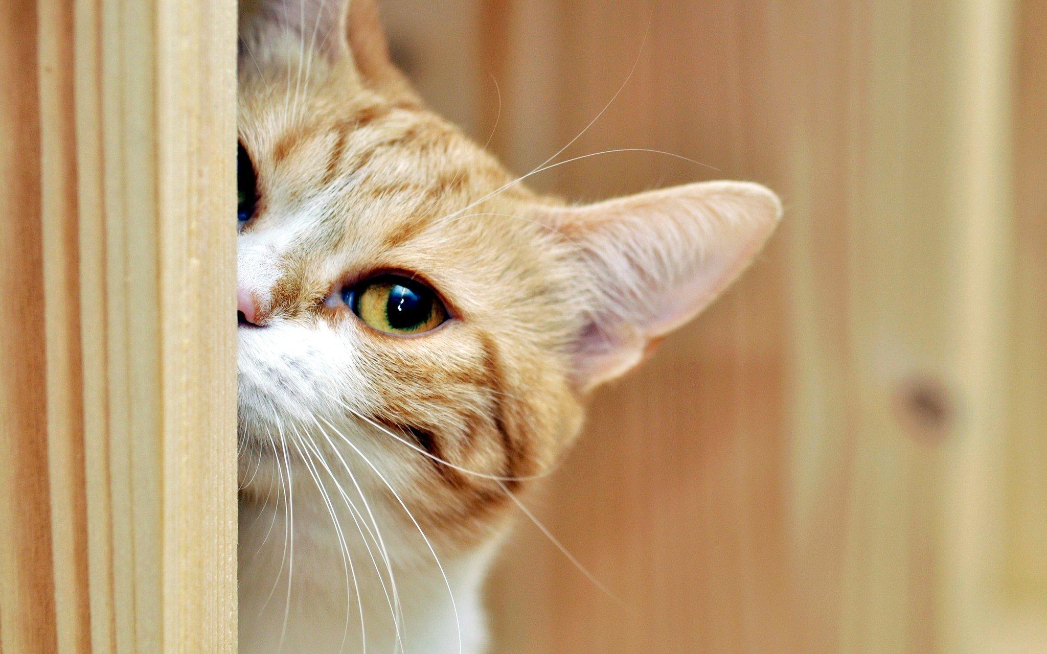 картинки послушный котик раз