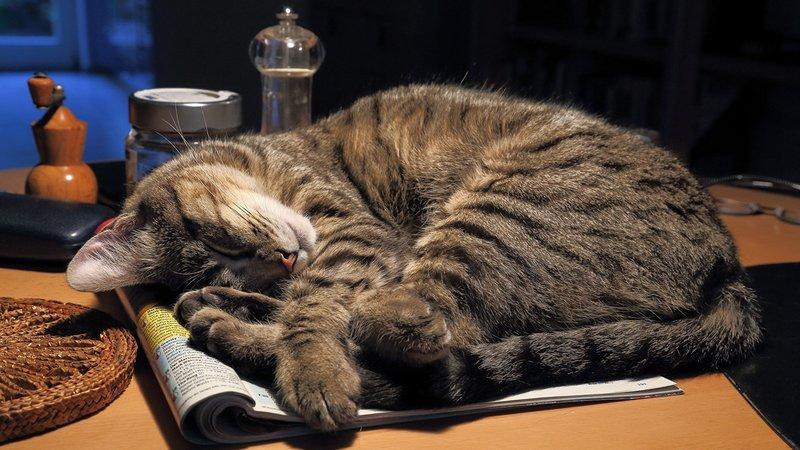 Котик на столе заснул