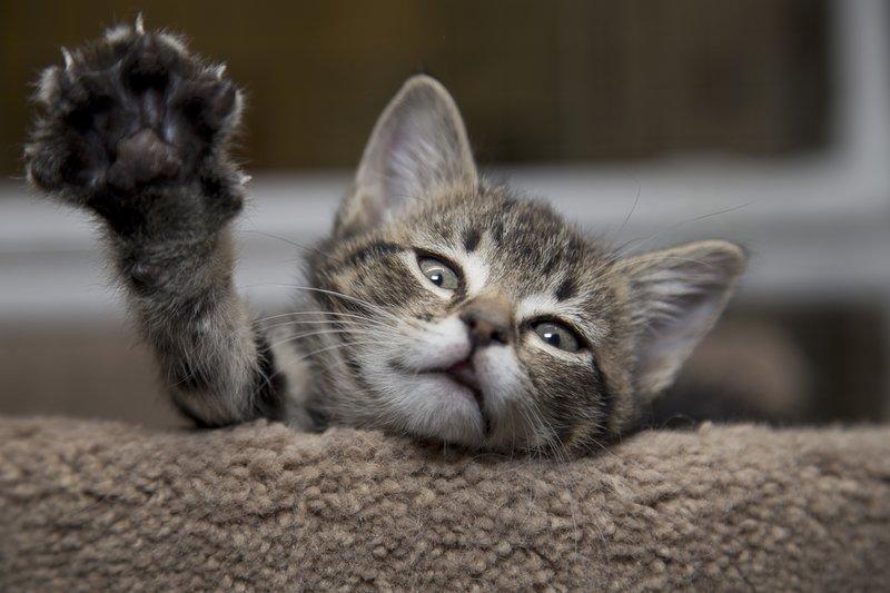 Котик тянется за чем-то