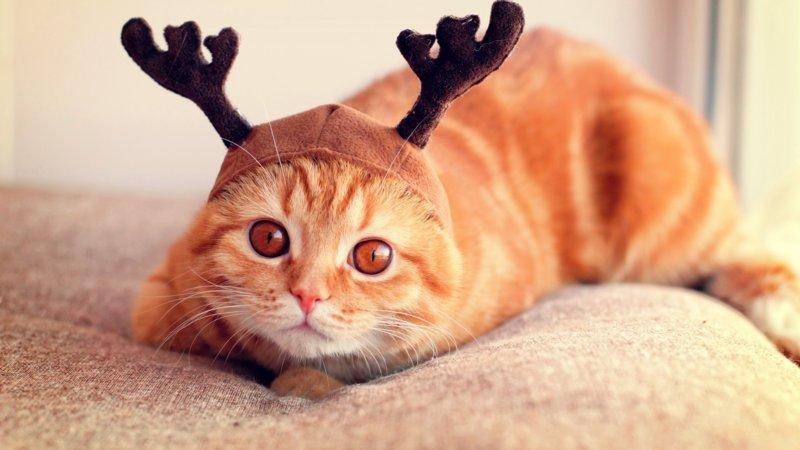 Котик в оленьих ушках