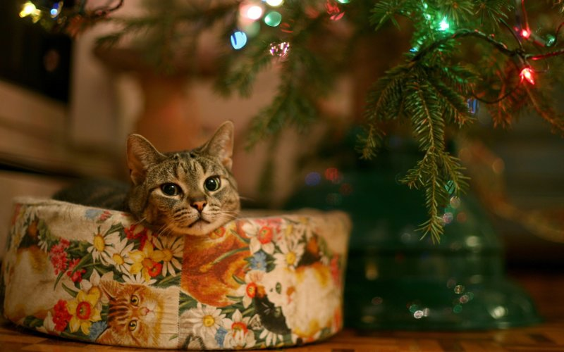 Котик выглядывает из-за елки