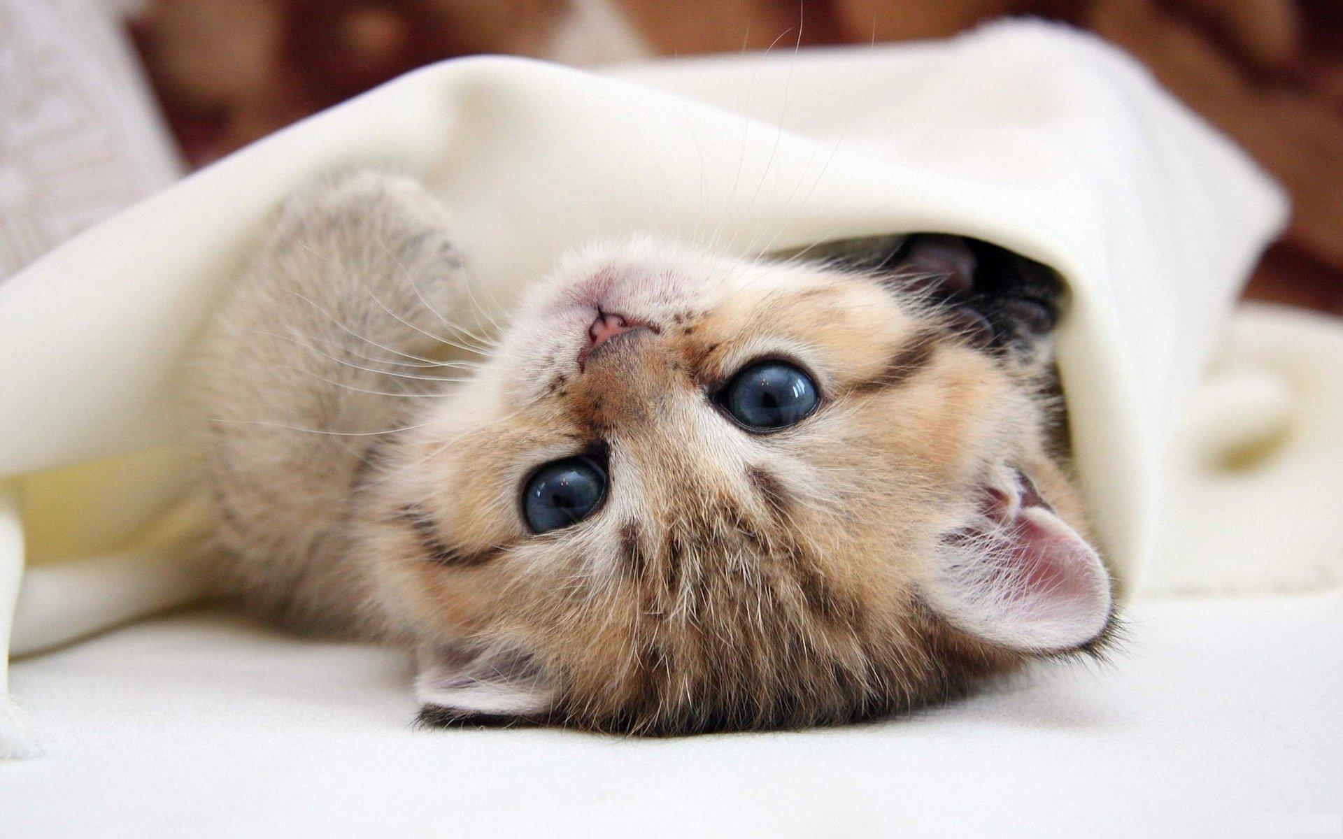 этом картинки мимими животных малиновом