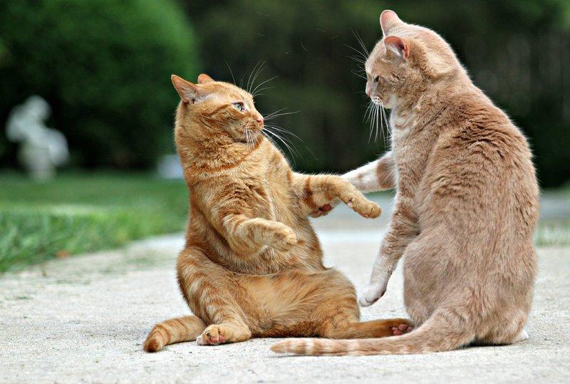 Коты на разборке