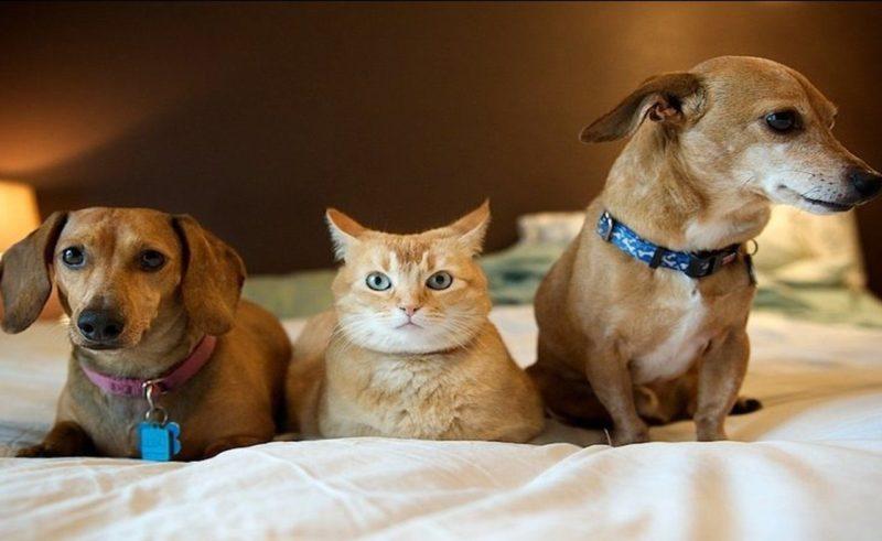 Кот и две собаки