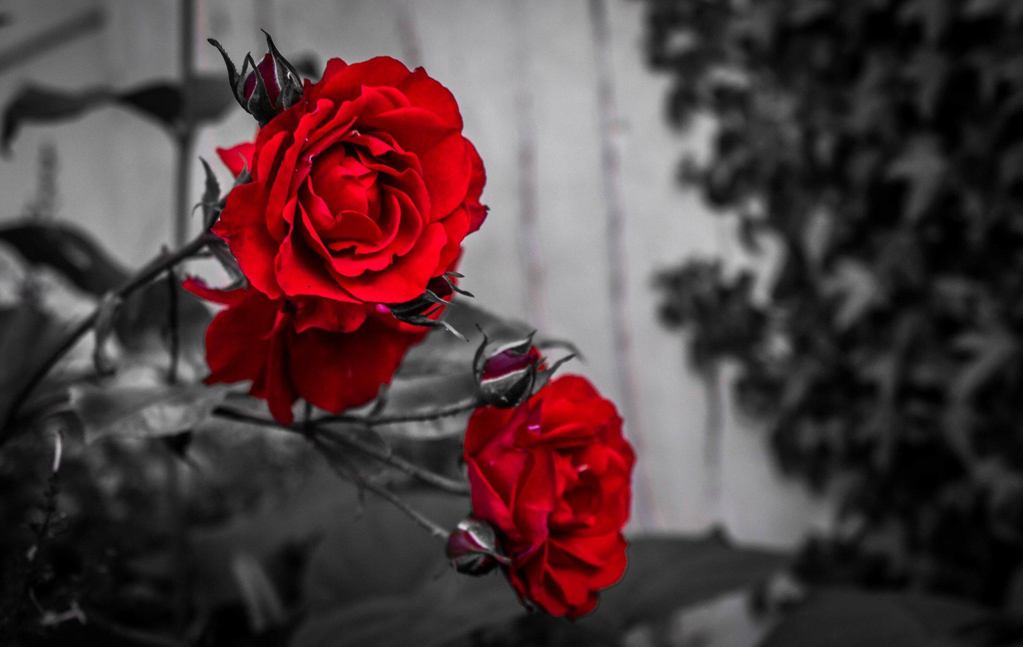 фото в черно бело красном цвете корки