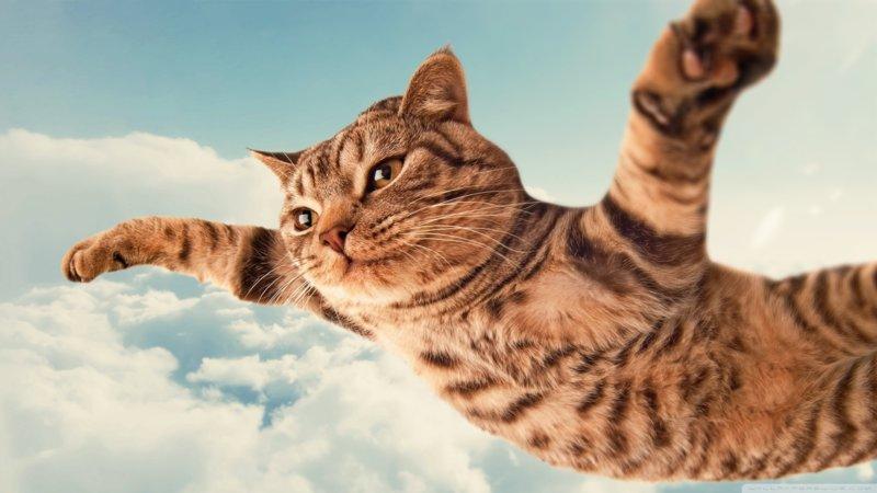 Летающий котиу